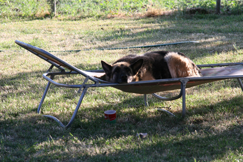 Bezárt kutyákat hagynak szenvedni, a polgármester a megmentőiket fenyegeti