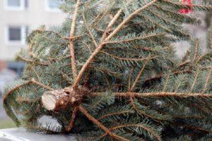Karácsonyfák elszállítása Horton