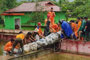 Krokodil végzett egy Indonéz nővel