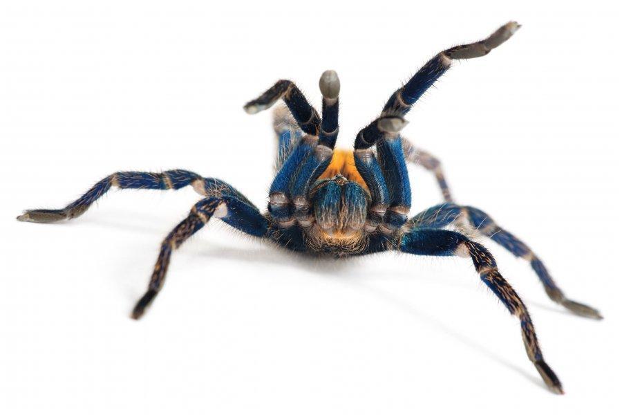 A pókok az összes emberrel elbírnának