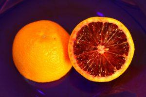 Csaknem 100 százalékos pontossággal képesek kiszagolni a kutyák a citrusféléket sújtó kórt